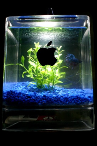 Apple_Aquarium_Dess